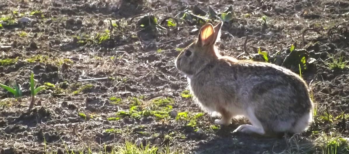 Bunny May 2018
