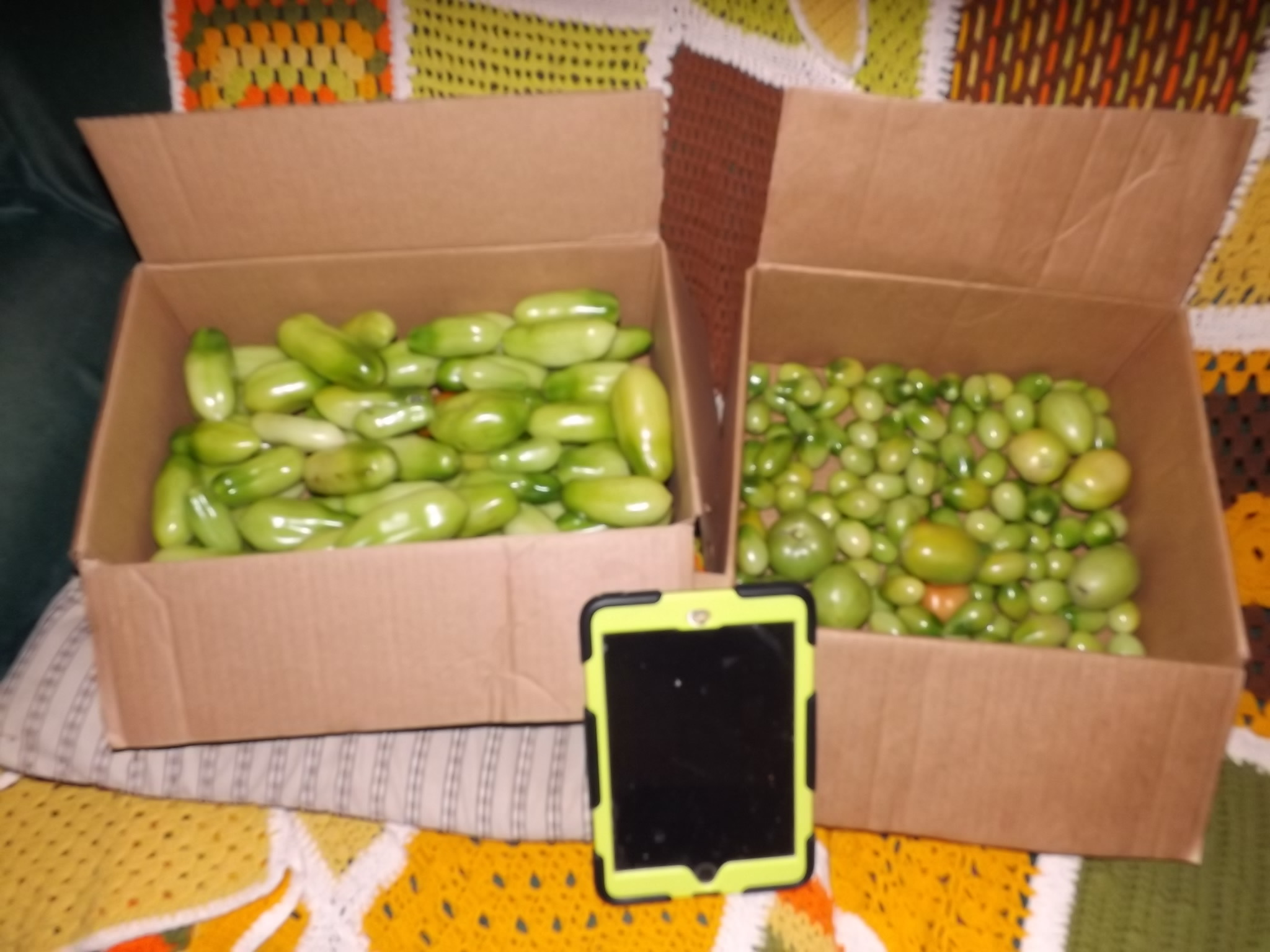 two boxes of green tomatoes