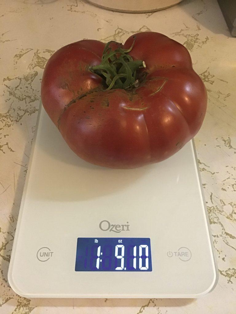 1 pound 9.1 ounce beefsteak tomato