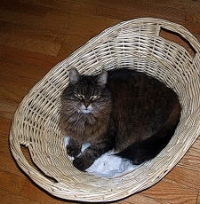 Mist In Her Basket