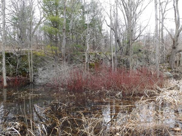 RideauSwamp