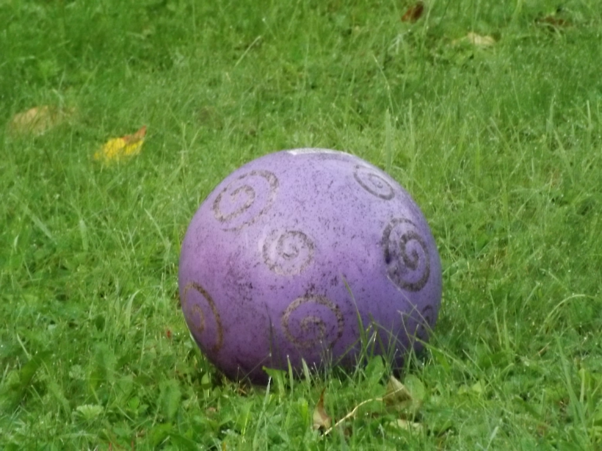 purple ball in the back yard called wallyball