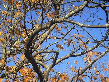 Autumn wind DSCF3714