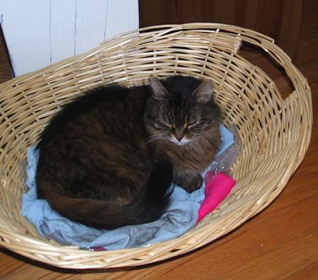 Kittybasketbed