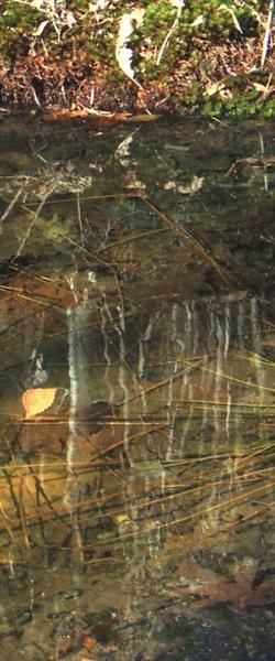 Leaf on spring puddle