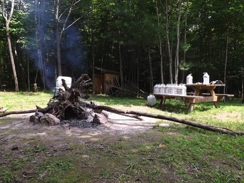 Pine stump burn Rideau Camp july 29