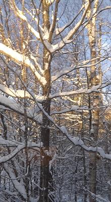 Snow Nov19 2014 2