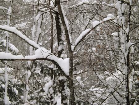 Snow in trees DSCF4641