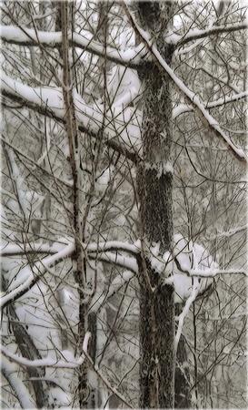 Snowbanksinsky
