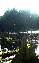Ontario Wetland